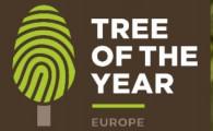 Голосуем за представителя России на международном конкурсе «Европейское дерево года» –  Древний платан из Республики Дагестан!